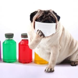 日本製の布マスクをポチっ。