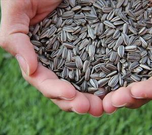 細木数子の名言!いくら良い種でも冬に撒いた種は芽を出してくれないという事