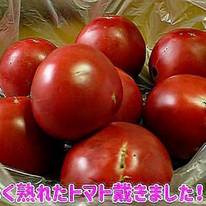 赤い頂き物に~向日葵畑~