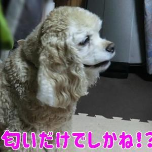 焼肉で☆ステイホーム~♪