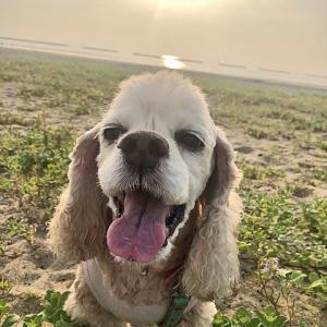 海へ散歩に~まだ暑かったでしよ!