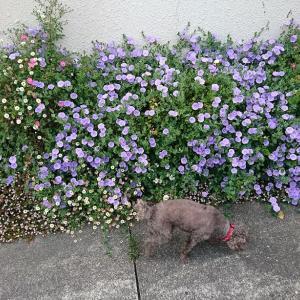 花盛りと近況