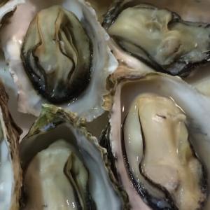 伊勢神宮参拝の後、牡蠣小屋で牡蠣の詰め放題を楽しもう!