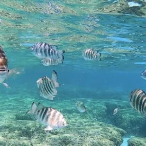 グアム ・イパオビーチでシュノーケリング!熱帯魚に囲まれるのだ