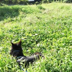 草叢で憩うヒトたち
