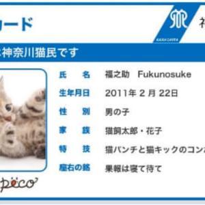 猫や犬は家族です❣️神奈川県「犬民カード」「猫民カード」発行開始❣️
