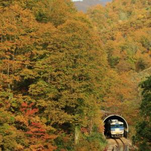 只見線の紅葉のトンネルを行くキハ48(大白川~只見)