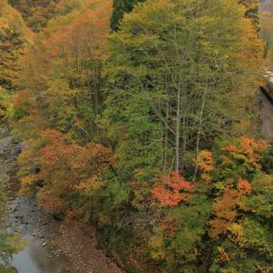 只見線の紅葉区間の六十里越えトンネルから大白川へ向かうキハ48(大白川~只見)