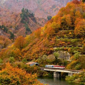 只見線の紅葉の田子倉湖を行くキハ47+48(大白川~只見)