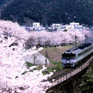 山陰本線の桜の里の矢田川橋梁を行く181系特急「はまかぜ」他(香住~鎧)
