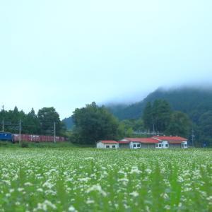 伯備線のそばの花と朝霧の中を行EF64-1044号機牽引のコンテナ貨物(根雨~黒坂)