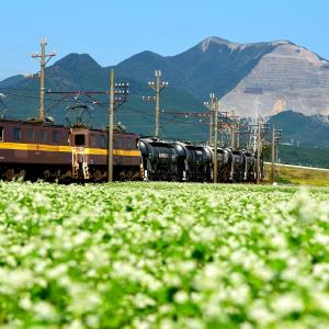 三岐鉄道のそばの白い花が咲き誇る風景の中を行くセメント貨物他(丹生川~三里)
