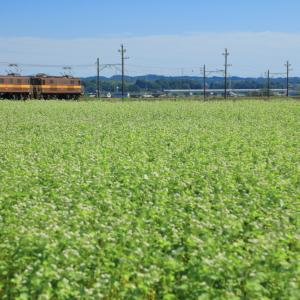 三岐鉄道のそばの白い花が咲き誇る秋の日和を行くED45重連単機回送(丹生川~三里)