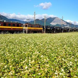 三岐鉄道のそばの白い花が咲き誇る藤原岳の裾野を行くED45重連牽引セメント貨物(丹生川~三里)