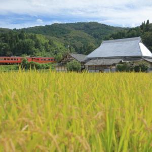津山線の実りの黄金色の稲穂風景の中を行くキハ47系ローカル列車(弓削~神目)