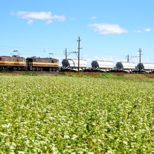 三岐鉄道のそばの白い花が咲き誇る日和を行くED45重連牽引の白ホキ貨物(丹生川~三里)