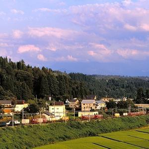 上越線の夏の穀倉地帯を行く懐かしのEF64重連牽引のコンテナ貨物と115系ローカル列車(小千谷~越後川口)