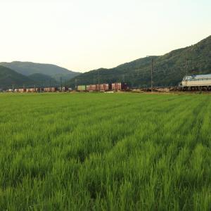 山陽本線の夏の水田風景を行くEF66-132牽引のコンテナ貨物67レ他(三石~上郡)