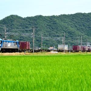 山陽本線の夏の緑のカーペットの中を行くEF210形機関車(三石~上郡)