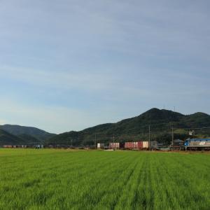 山陽本線の朝陽に輝く緑のカーペットを行くEF210ー162号機牽引のコンテナ貨物他(三石~上郡)