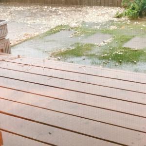 台風19号の猛威 用水路が溢れて庭が池になった!
