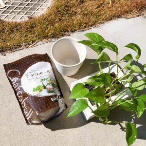 無印良品の壁にかけられる植物を植え替え 楽天マラソンポチレポ