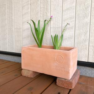 水耕栽培のヒヤシンス 花が咲き終わったらやること