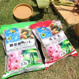 植え替えシーズンに役立つ!ダイソーで買える園芸用品