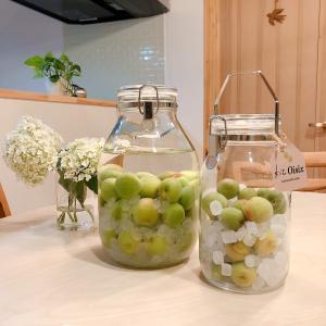 今年の梅仕事は梅シロップと梅酒作り Oisixのキットで楽々