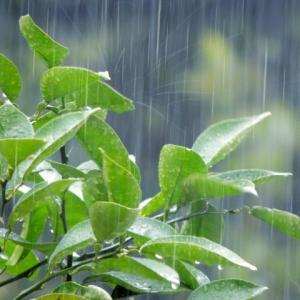 親子で梅雨時期を楽しもう 雨にちなんだ英単語集♪