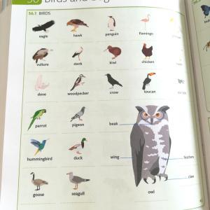 英語で鳥は? 鳥は鳥でも、鳥の種類を英語でどれだけ知ってる?