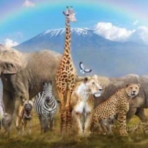英語で動物の群れ 何というの? 覚えておきたいフレーズ集