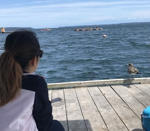 チヌと故郷と臭い粉【後編】~魚影濃し、新崎筏~