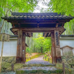 京都竹の寺「地蔵院」で音楽奉納