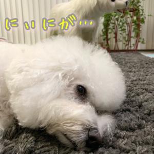 犬マンガ風に★しょんぼり…ですの…エルですわ。