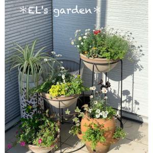 EL's garden★玄関横の寄せ植え完成!朝日を浴びて庭の主エル様と撮影会