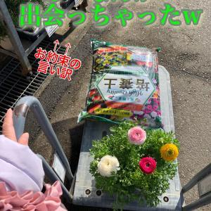 冬に咲く薔薇ラナンキュラスの寄せ植え★隙間の淋しさはピックで埋める!
