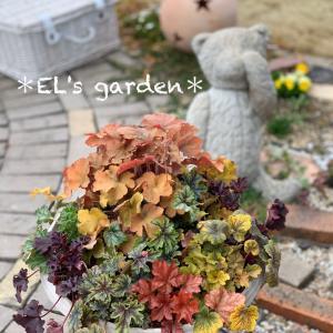 ヒューケラMIX盛り合わせ★メルヘン地植え花壇とセダムの里&アメトピ
