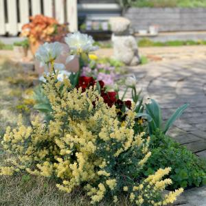 ひよこ色×桃色×白★パステルカラー花壇のラブリーなアンジェリカ