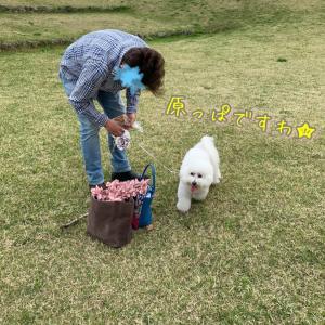 母の日の薔薇ブルーパフュームと飛行犬