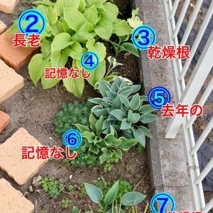 お庭で怪奇現象が…(´;ω;`)なんで?どうして?なにコレ〜
