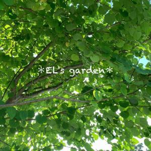 ラベンダー擬態な寄せ植え花壇の完成★晴れってサイコー!!