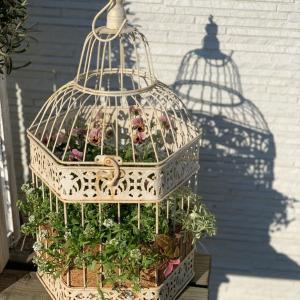 アイアンの鳥籠に寄せ植えの作り方★フレンチシャビーなビオラの寄せ植え
