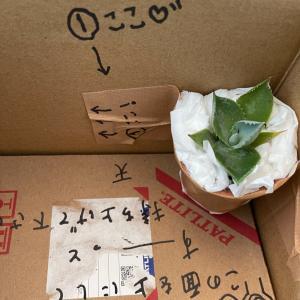 ブロ友さんから緑が詰まった素敵便が届きました〜!