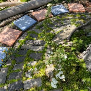 経年セダムが作り出す緑の絨毯★ 木漏れ日の降り注ぐ桂の木の下