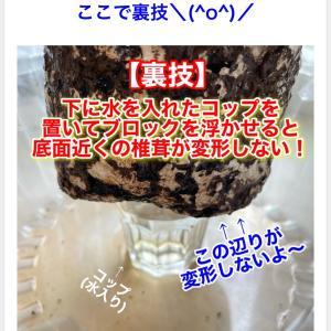 GWにオススメ!お家で簡単シイタケ栽培+多肉の交配&食虫植物