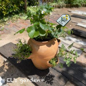 ハーブと苺の寄せ植え作ったよ★ストロベリーポットに植え付ける方法