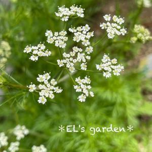 5月はハーブの植え付け適期!おうち時間に食べる花壇を作ろう