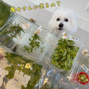 ハーブ&花&山菜のフレッシュ便★へっぽこ家庭菜園
