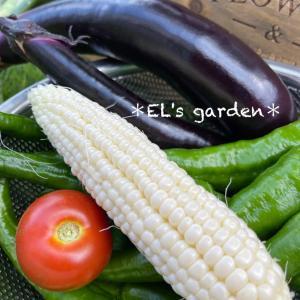 この夏の初収穫★家庭菜園初心者にオススメの野菜は?